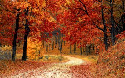 What Is a Seasonal Ayurvedic Cleanse?